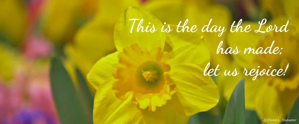 daffodils-easter-flowers-1200x500